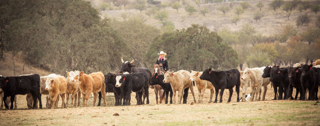 morgan_cromer_cutting_herd